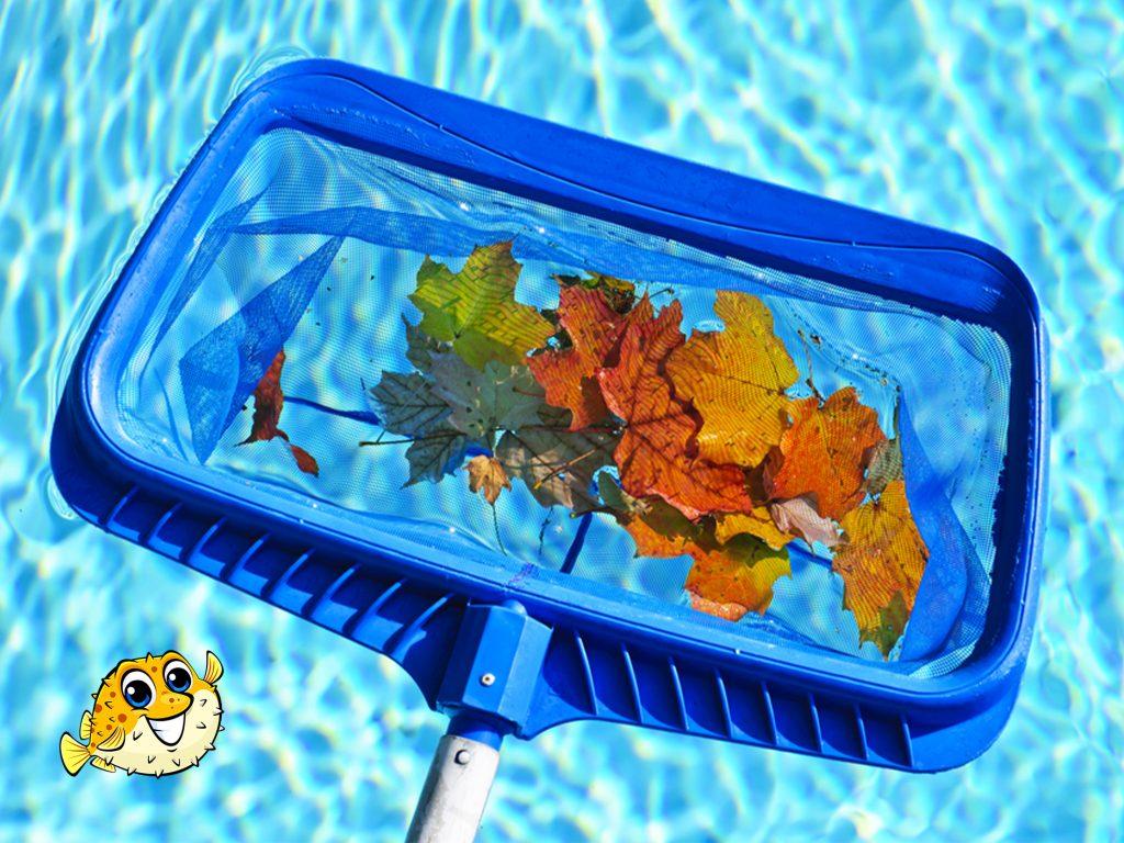Abbotsford Seasonal Pool Maintenance